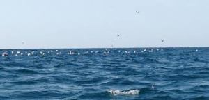 angin laut